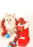 Gato blanco con los juguetes de la Navidad Fotografía de archivo libre de regalías