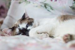 mancha oscura en ojo de gato