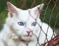 Gato blanco detrás de la red Imagen de archivo libre de regalías