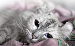Gato blanco drowsing en la cama imagen de archivo