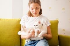Gato blanco dulce Imagenes de archivo