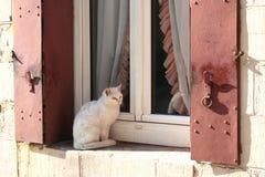 Gato blanco dulce que se sienta en un travesaño de la ventana Foto de archivo libre de regalías