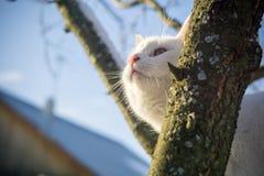 Gato blanco en árbol del invierno foto de archivo libre de regalías