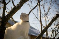 Gato blanco en árbol del invierno fotos de archivo libres de regalías