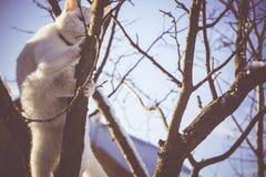 Gato blanco en el árbol del invierno filtrado Foto de archivo