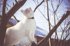 Gato blanco en el árbol del invierno filtrado Fotografía de archivo libre de regalías