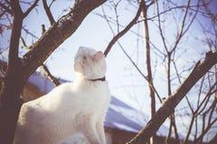 Gato blanco en el árbol del invierno filtrado fotos de archivo libres de regalías