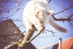 Gato blanco en el árbol del invierno filtrado imagen de archivo libre de regalías