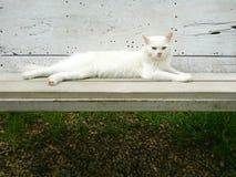 Gato blanco en el banco Fotos de archivo