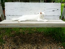 Gato blanco en el banco Imagenes de archivo