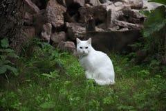 Gato blanco en el jardín Foto de archivo libre de regalías