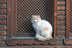 Gato blanco en la ventana Fotografía de archivo libre de regalías