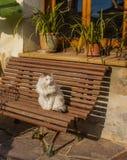 Gato blanco en un banco Imágenes de archivo libres de regalías