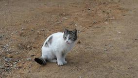 Gato blanco enfermo, sintiendo gato mal, blanco, gato de la calle en el pueblo, almacen de video