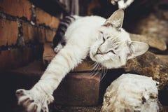 Gato blanco grisáceo cerca de la casa Foto de archivo libre de regalías