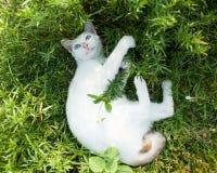 Gato blanco hermoso Imágenes de archivo libres de regalías