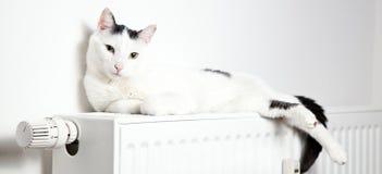 Gato blanco hermoso que se relaja en el primer del radiador fotografía de archivo libre de regalías