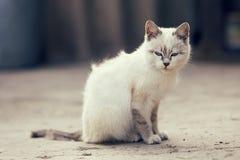Gato blanco lindo Imagen de archivo