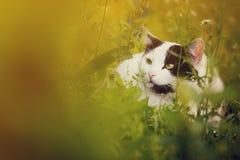 Gato blanco lindo en la hierba Fotografía de archivo libre de regalías