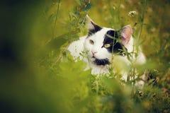 Gato blanco lindo en la hierba Fotografía de archivo