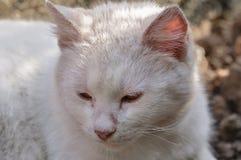 Gato blanco lindo que miente en el patio en un d?a soleado hermoso fotografía de archivo