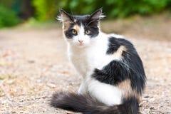 Gato blanco negro Imagen de archivo