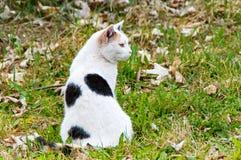 Gato blanco negro que se sienta en el prado y los pájaros de observación Foto de archivo