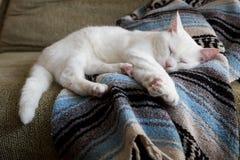 Gato blanco que duerme en la manta Fotos de archivo