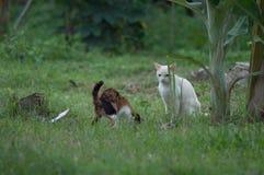 Gato blanco que juega alrededor con otro en las hierbas fotos de archivo