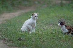 Gato blanco que juega alrededor con otro en las hierbas imagen de archivo