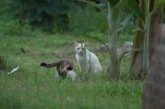 Gato blanco que juega alrededor con otro en las hierbas foto de archivo libre de regalías