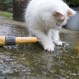 Gato blanco que juega con agua Imagenes de archivo