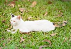 Gato blanco que miente en el campo de hierba foto de archivo libre de regalías