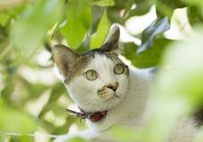 Gato blanco que mira de detrás las hojas verdes Fotos de archivo