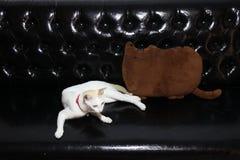 Gato blanco que se acuesta con la forma de la almohada del gato en color marrón en el sofá de cuero negro fotografía de archivo libre de regalías