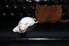 Gato blanco que se acuesta con la forma de la almohada del gato en color marrón en el sofá de cuero negro imagen de archivo libre de regalías