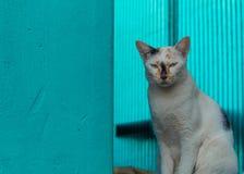 Gato blanco que se sienta en el balcón fotos de archivo