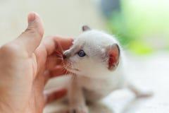 Gato blanco recién nacido fotos de archivo