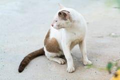 Gato blanco sin hogar Foto de archivo libre de regalías