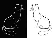 Gato blanco y negro. Imagen de archivo