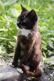 Gato blanco y negro con los ojos verdes imagen de archivo libre de regalías