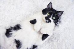 Gato blanco y negro con los ojos verdes Fotos de archivo libres de regalías