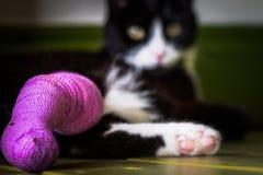 Gato blanco y negro con una pierna quebrada Imagen de archivo
