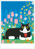 Gato blanco y negro en jardín Imagenes de archivo