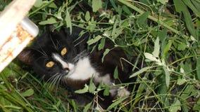 Gato blanco y negro en la hierba Imagen de archivo