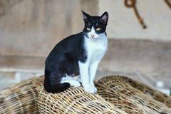 Gato blanco y negro en la isla griega Imagenes de archivo