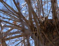 Gato blanco y negro en un árbol Foto de archivo libre de regalías