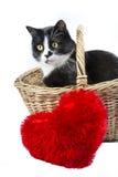 Gato blanco y negro en una cesta con una almohada roja del corazón Imagenes de archivo
