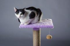 Gato blanco y negro lindo con los ojos verdes, retrato Imagen de archivo libre de regalías