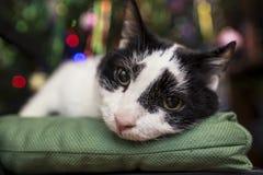 Gato blanco y negro mestizo triste, lindo que miente en una píldora verde suave Imagen de archivo libre de regalías